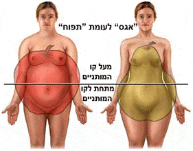 ציור נשים בעלות מבנה גוף אגסי ותפוחי