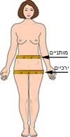 ציור אישה המראה היכן לבצע מדידות עבור ייחוס מותן ירך